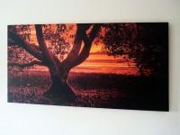 "Mangrove 48""x20"" -  Photographer Tania Bruhl"