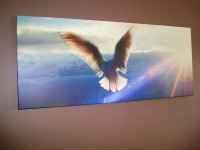"Dove 48""x20"" - 