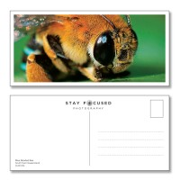 Postcard Nature